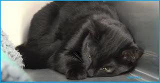 Ciri ciri Kucing Stres Penyebab Dan Cara Menyembuhkan