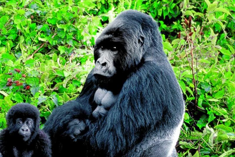 Kel 12 Calendario Viaggi.Uganda E Rwanda Kel 12 Storie Di Montagna D Acqua E Di
