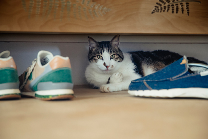 tabby and white cat sitting under cupboard with some trainers