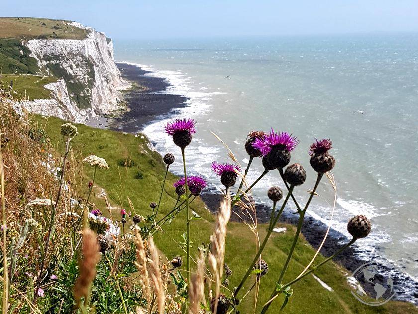 Białe klify w Dover