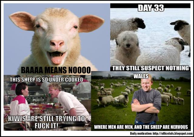 Funny sheep jokes - photo#29