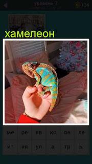 на руках человек держит хамелеона 667 слов 7 уровень
