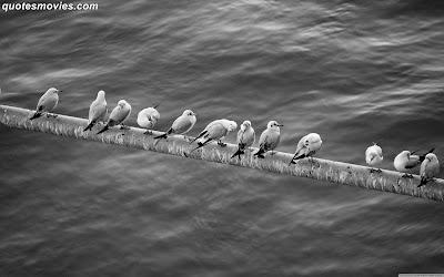 Free wallpaper high quality birds