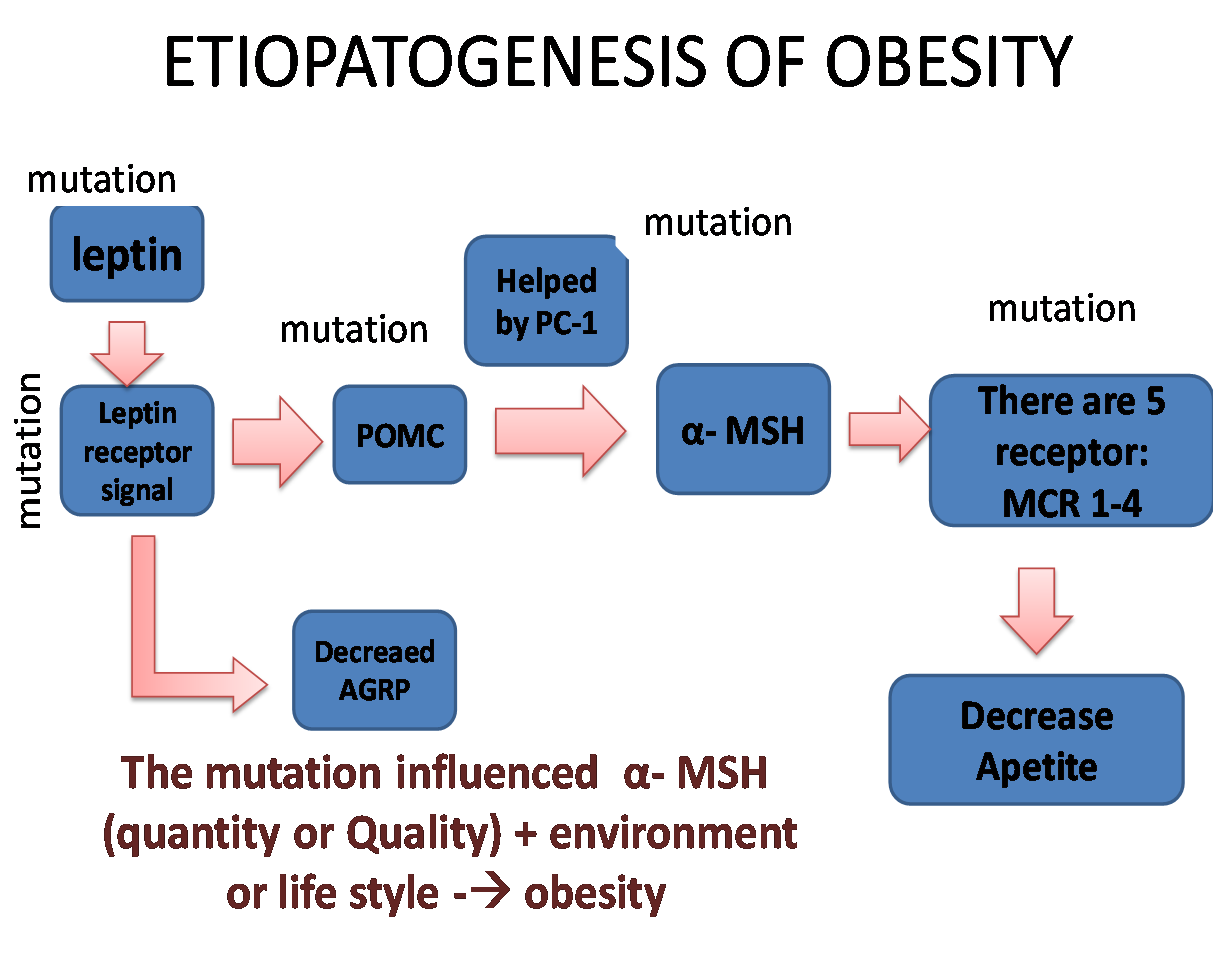 Mengenal Sindrom Metabolik