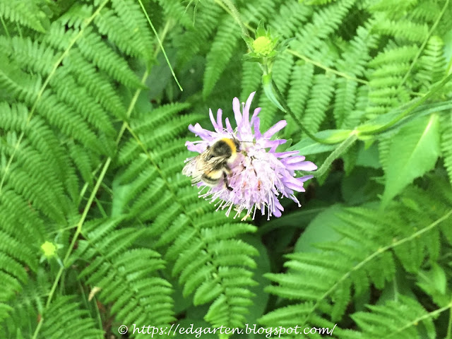 Biene im Farn