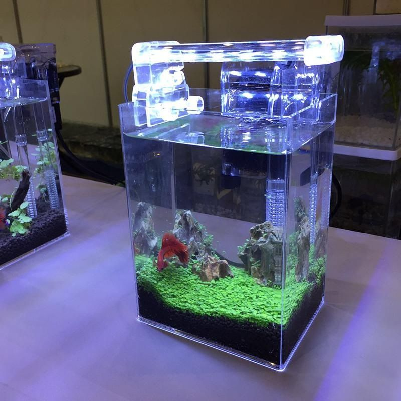 Image The 5-Minute Rule for Best Betta Fish Tank
