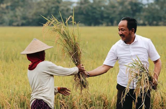 Pertanian Maju, Ponorogo jadi Produsen Padi tertinggi di Jawa Timur
