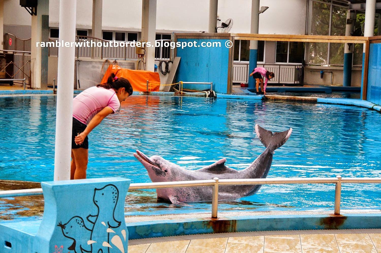 pink dolphin, Underwater World, Sentosa, Singapore