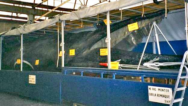 dead whales tour