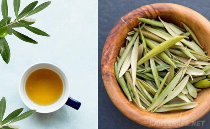 zeytin yaprağı çayın faydaları, organik zeytin yaprağı bitki çayının faydaları - www.kahvekafe.net