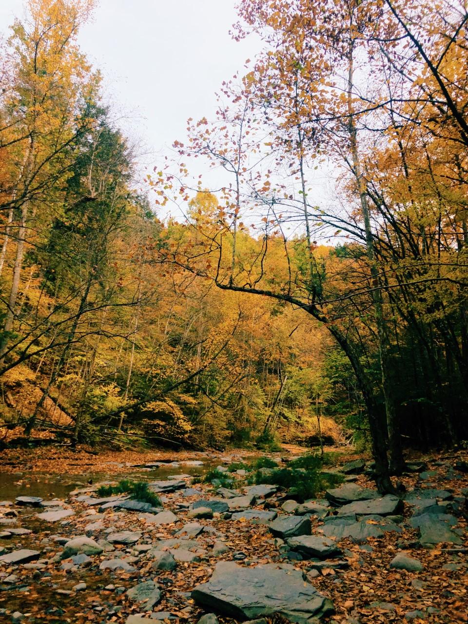 Hiking at Robert H. Treman State Park | Organized Mess