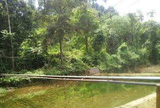 Gambar pohon durian dan sungai