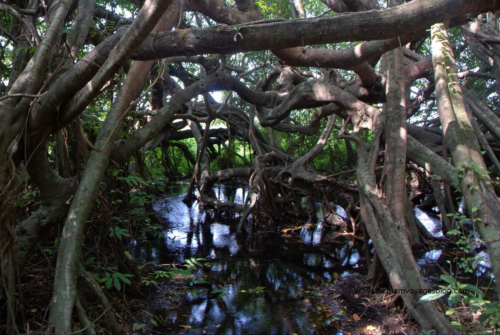 Cây Si trăm nhánh trong rừng Quốc Gia Nam Cát Tiên