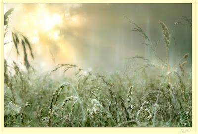 Летнее утро, рассвет