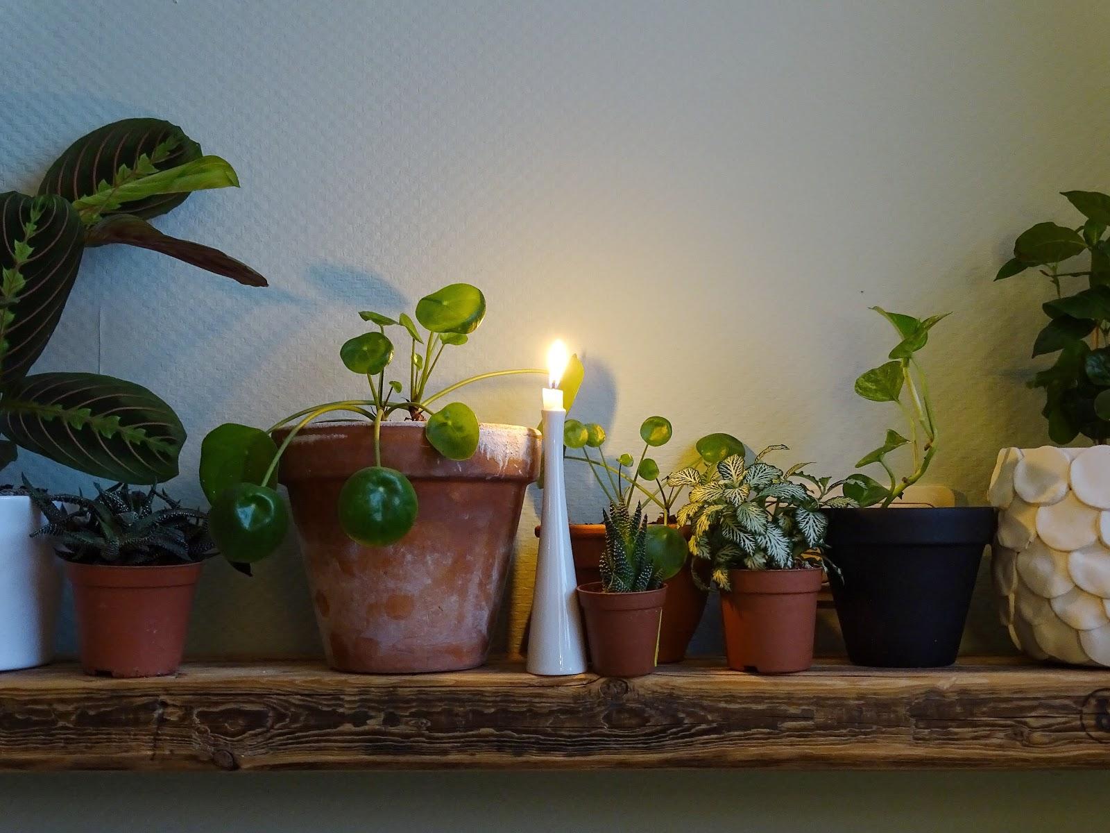 Zimmerpflanzen auf Altholzregal - Fotoaktion #12von12 und 1 Tag in 12 Bildern - https://mammilade.blogspot.de