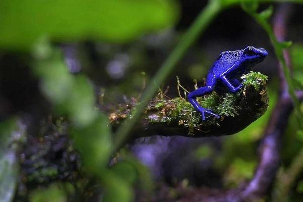 Chiêm ngưỡng loài ếch phi tiêu độc tại S.E.A Aquarium