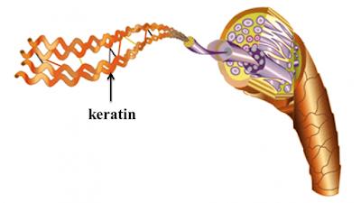 Vai trò của keratin trong phục hồi tóc hư tổn