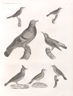 Primates and pigeons have something in common, but it does not support evolution. Pigeons have surprising cognitive skills.