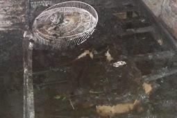Ariffin Ungkap Polisi Dalami Kebakaran Rumah dan Korban di Kaiburse
