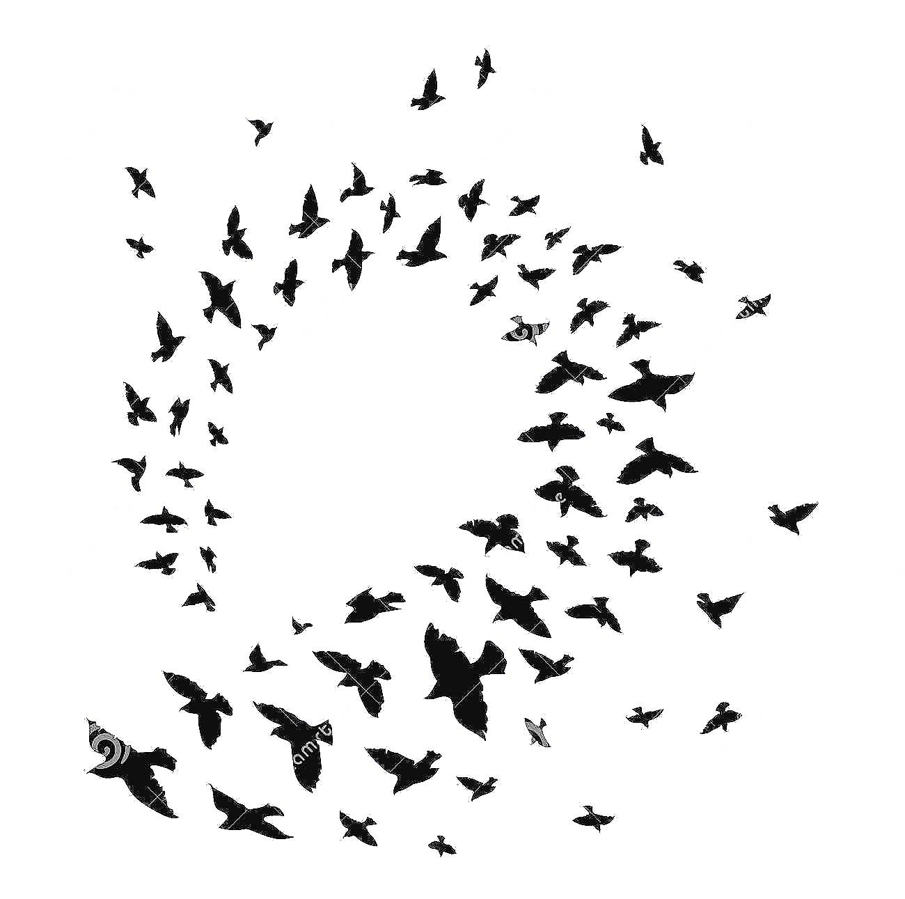 पक्षी या चिडिया झुंड में ही क्यों उड़ान भरते हैं ? वैज्ञानिक कारण by : Possibilityplus.in