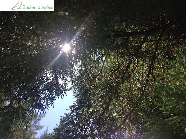 Encontro com outro árvore