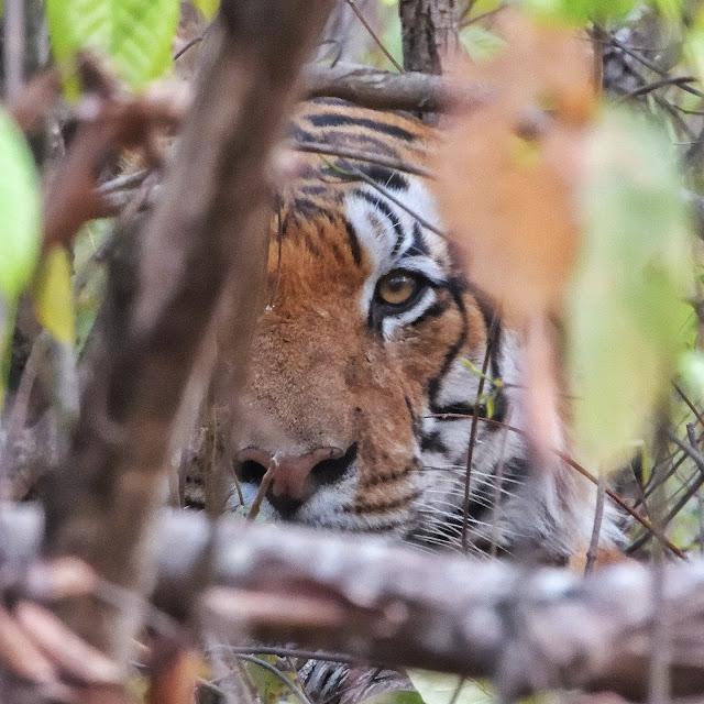 Jungle Safari in Bandhavgarh