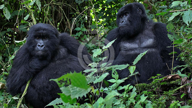 Rwanda focuses on high-end tourism