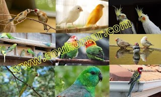 أجمل طيور زينة