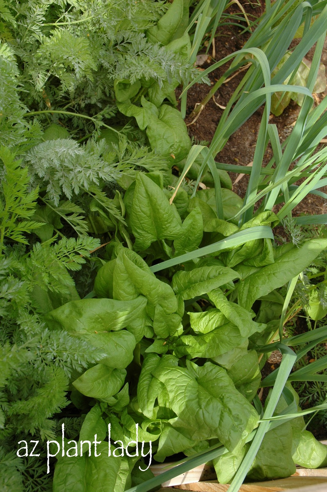 WInter and Summer Vegetables....Oh My! - Ramblings from a ...
