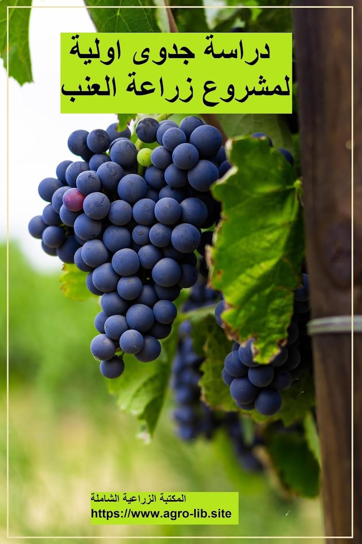 كتاب : دراسة جدوى اولية لمشروع زراعة العنب
