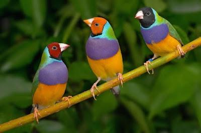 طيور زينة شكلها جميل