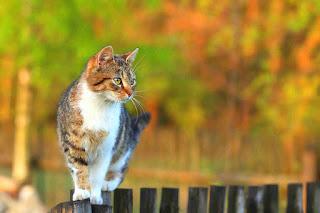Los poderes curativos de los gatos