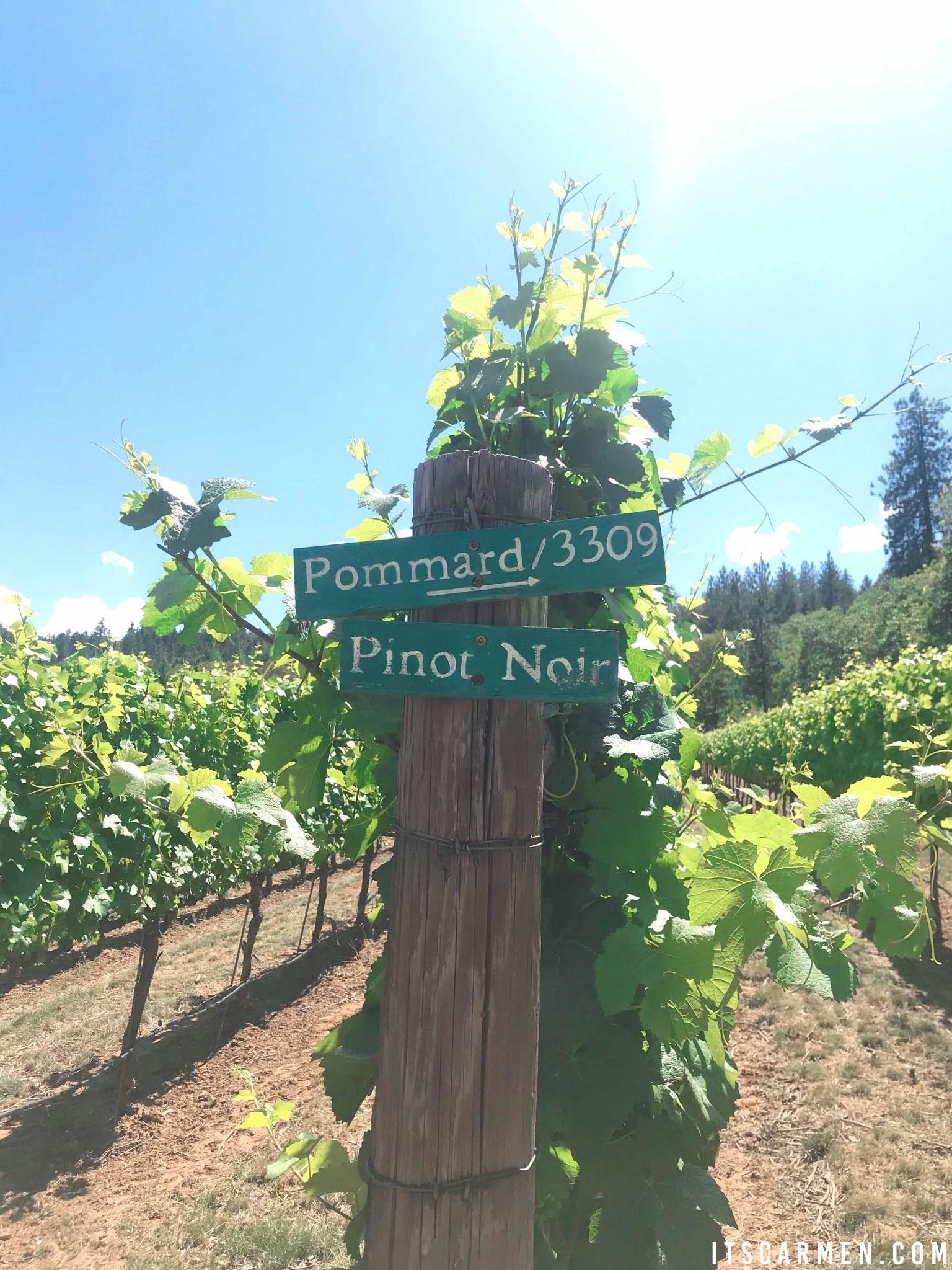 DANCIN Vineyards in Medford Oregon Tasting Room Menu Hours Southern Oregon Carmen Varner travel food blogger Parking