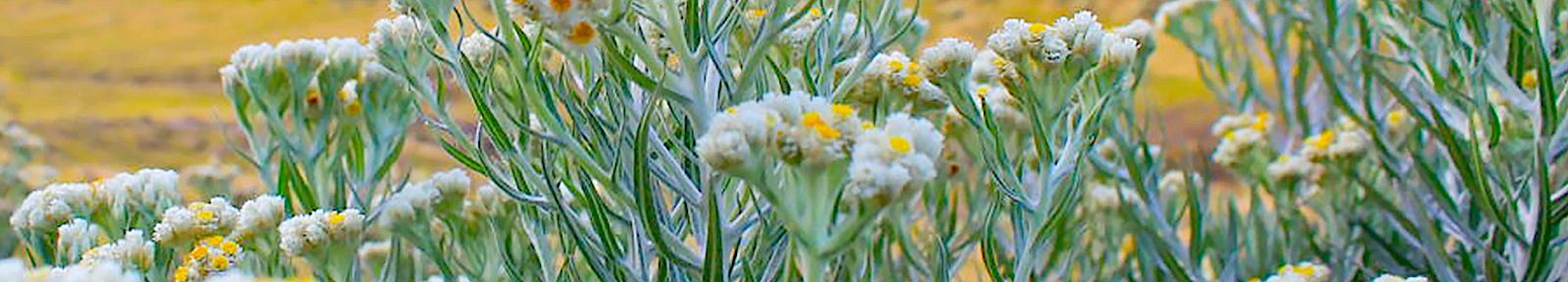 Цветы юбилярам