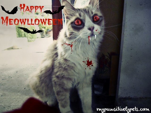 Vampire Cat - Happy Meowlloween