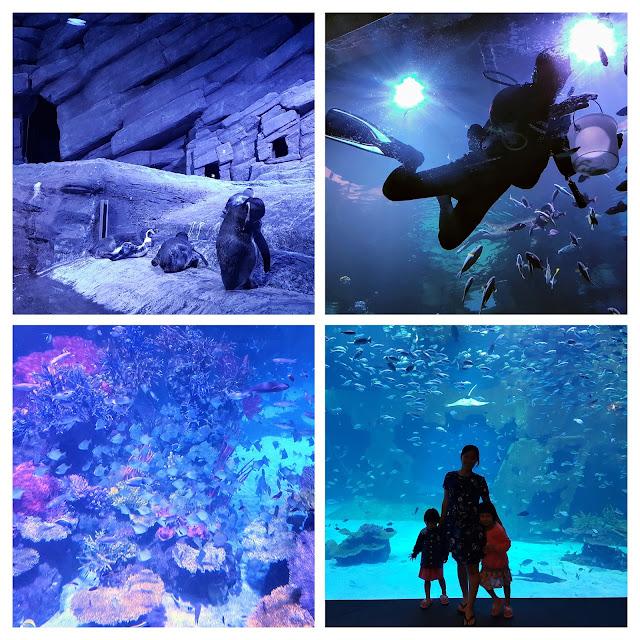 【普吉岛景点】普吉水族馆 Aquaria Phuket @ Central Phuket Floresta  泰国境内最大水族馆!