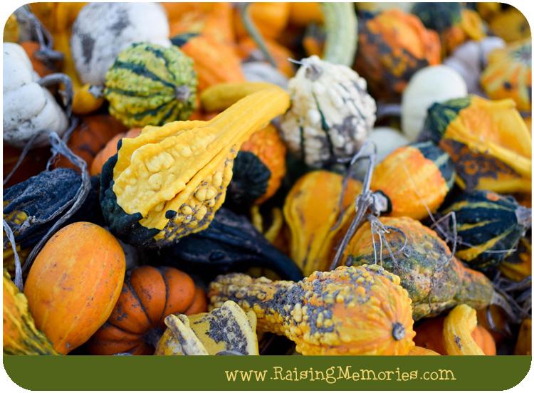 Annual Pumpkin Patch Trip ( #NikonMOMents Part 3)