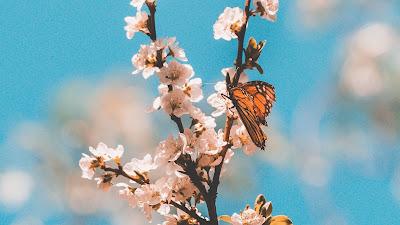 HD butterfly wallpaper, twig, flowers, macro