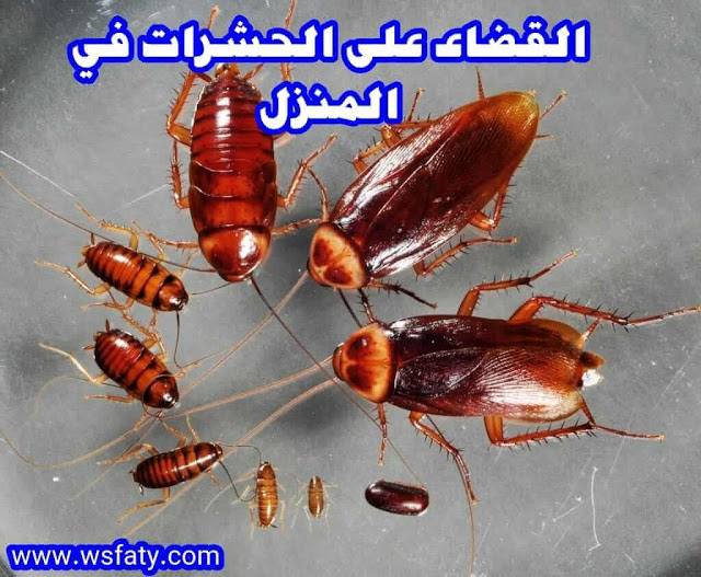 القضاء على الحشرات في المنزل