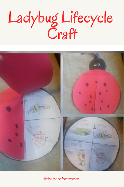 Ladybug Lifecycle Craft from The Barefoot Mom