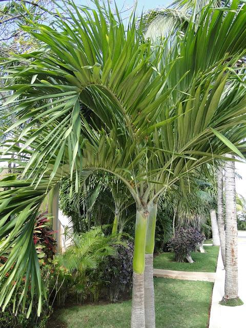 palm tree in garden, image via unsplash.com