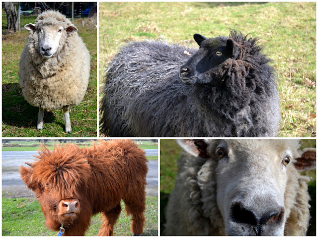 Real Farm Animals Sheep