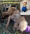 $5,000 reward for information on dog abandoned during a porta-potty