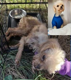 $5,000 reward for information on dog abandoned during a porta-potty