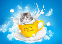 Coffee Milk cat