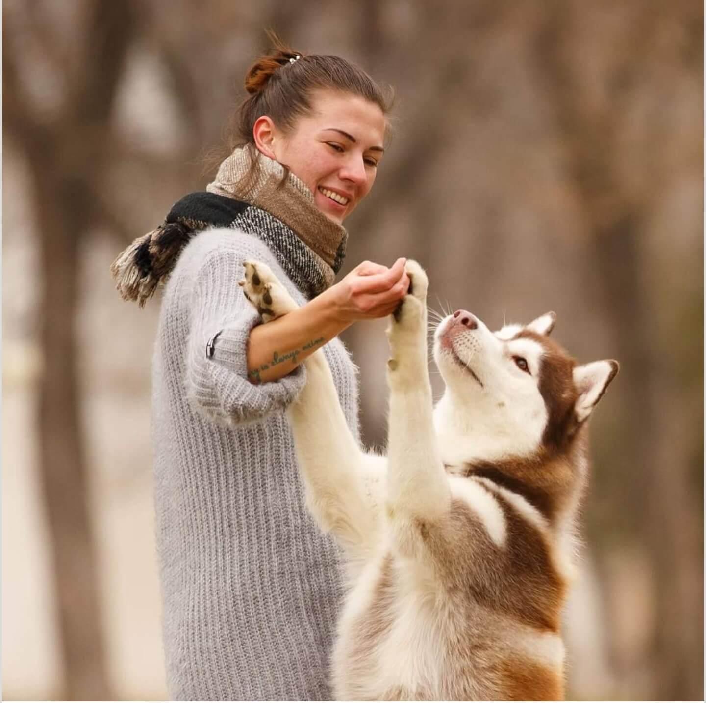Things Dogs Can Smell  pomeranian labrador doberman border collie puppy  cane corso