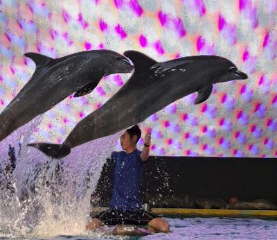 Pelatih lumba-lumba ancol