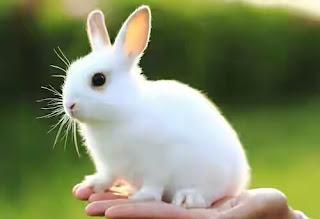 kata bijak kata indah untuk kelinci