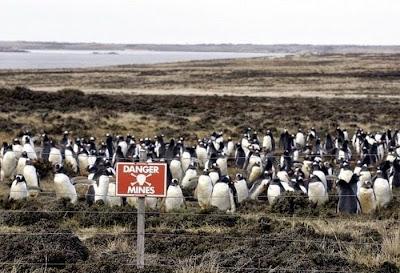 Resultado de imagem para ilhas malvinas e os pinguins