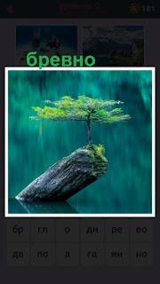 655 слов в воде торчит дерево на котором растет растение 2 уровень